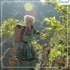 Du lịch Mù Cang Chải mùa lúa chín 3 ngày 2 đêm giá tốt năm 2021